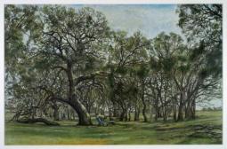 among-trees.jpg